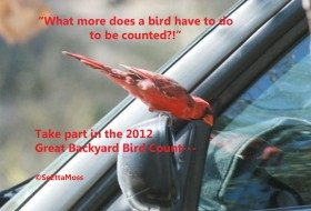 Let's make every bird count