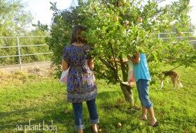 How to Plant and Care for Fruit Trees