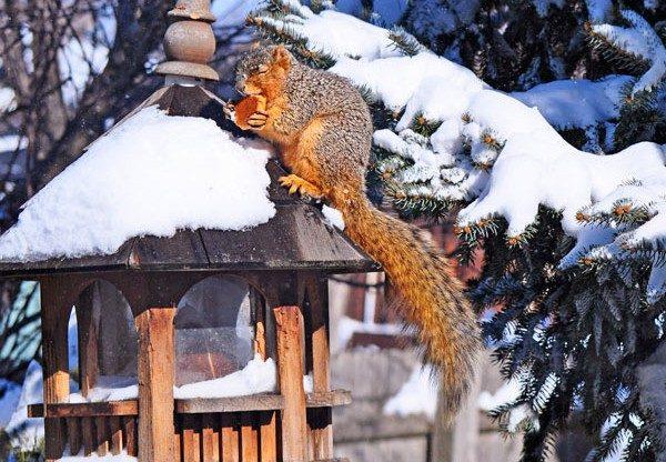 Squirrel Cookie Recipe