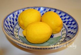 How to Get the Most Out of Lemons