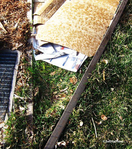 Cardboard Gardening Turning Lawn Into Garden Bed Birds