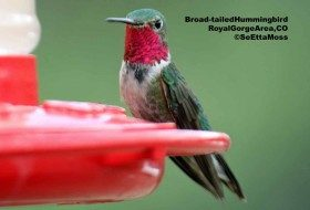 Spring hummingbird migration update: May 7, 2012
