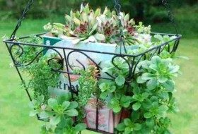 Cardboard Garden Project: Hanging Basket