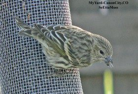 Cornell Lab is now radio tracking feeder birds