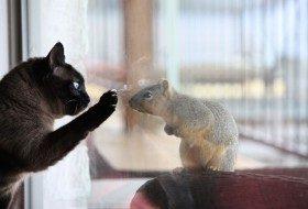 Friday Fun Photo: Squirrel & Siamese
