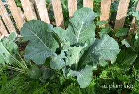 Cool & Warm-Season Vegetable Garden