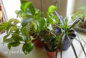 How To Keep Houseplants Free From Pests
