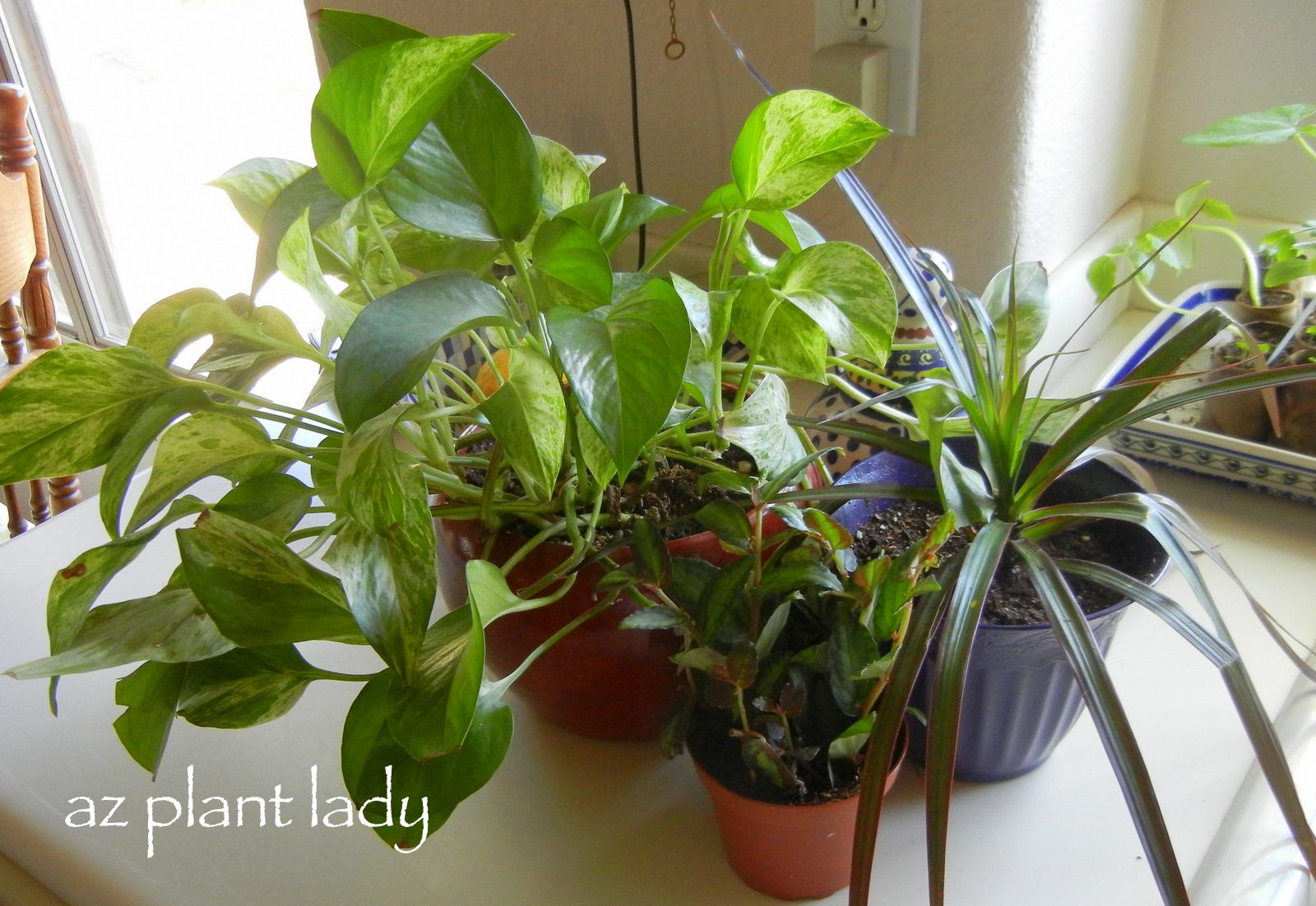 how to kill bugs on indoor plants