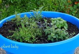 Plant Your Own Herb Container