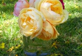 Special Tips for Gorgeous Roses