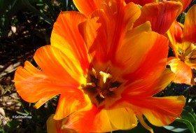 Bright blossoms for pretty pics