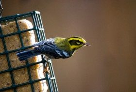 Nature Photography Secrets