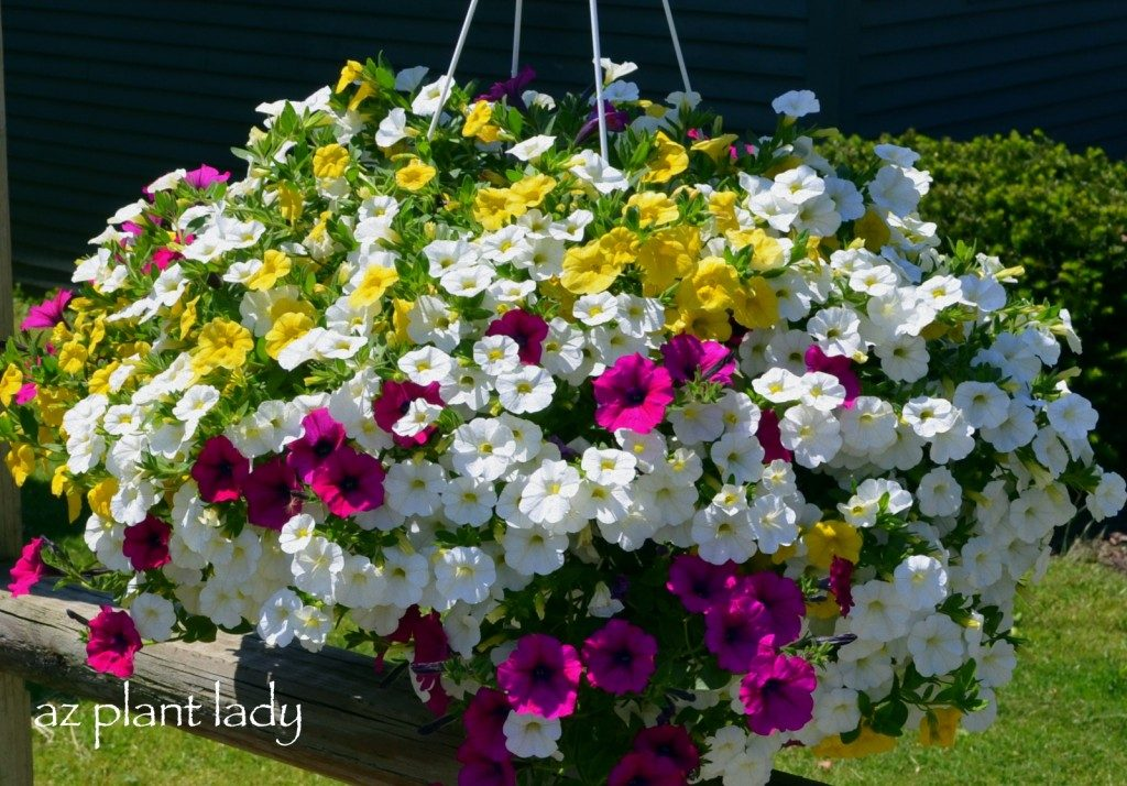 Colorful Flower Container Ideas - Birds and Blooms