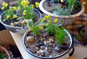 How to Make a Fairy Garden Container