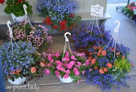 Colorful Flower Container Ideas