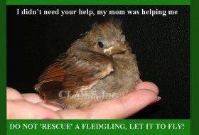 'I found a baby bird….'