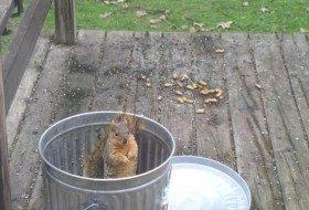 Friday Fun Photo: Fox Squirrel