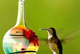 Great Hummingbird Products