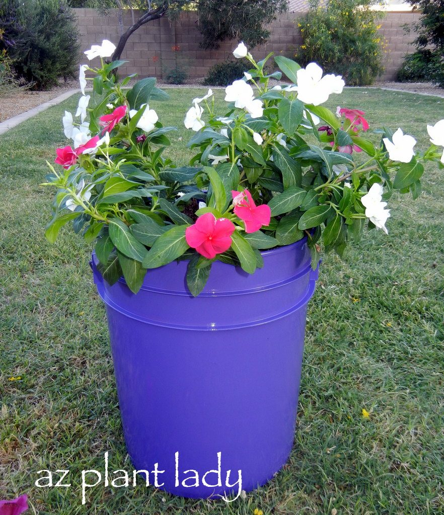 Diy Plant Containers Birds And Blooms