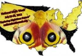 Get Ready for National Moth Week!