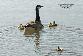 Parenting: Canada Goose style