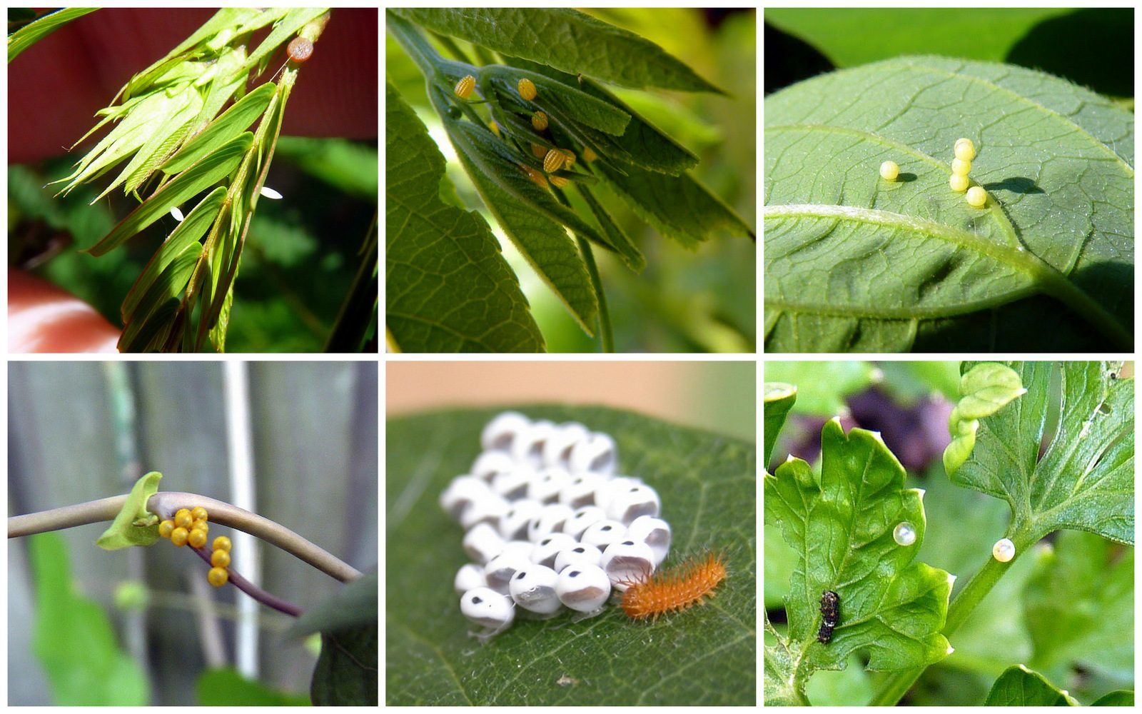 Eggs in the Garden, or Where Caterpillars Come From - Birds and Blooms
