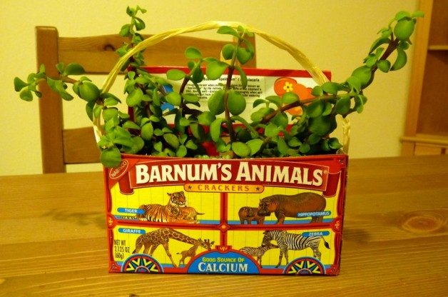 Animal Cracker Planter Box by J Staake