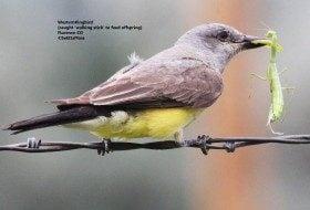 Baby birds: feeding hungry fledglings