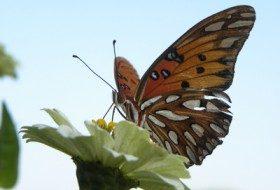 Butterfly Videos