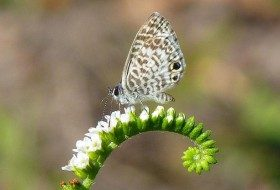 Simple Butterfly Photography Tips