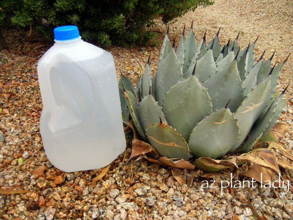 Diy drip water plants using milk jugs birds and blooms - Diy drip irrigation systems ...