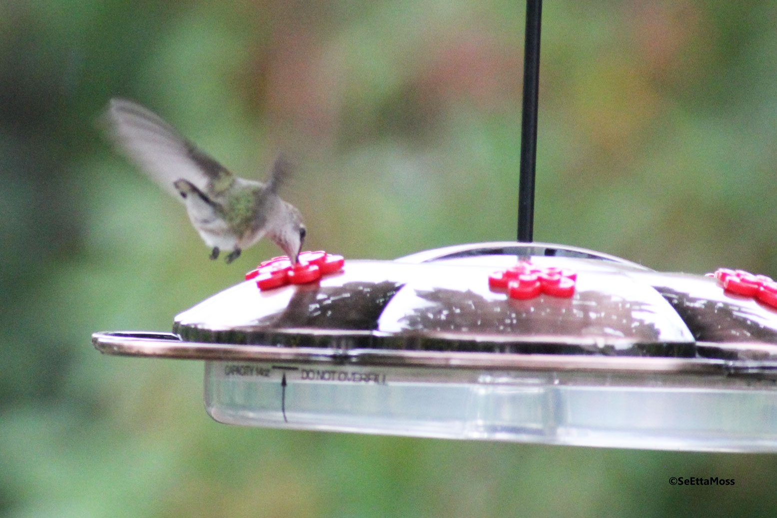 And These Saucer Type Feeders Are Simple A Bowl Lid Support Rod That Secures The Plus Functions As Hanger