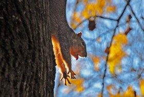 You Don't Say: Stretching Squirrel