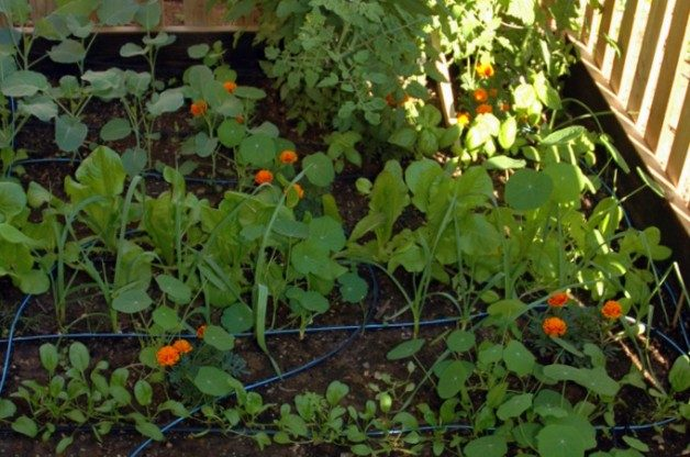 Preparing Your Fall Vegetable Garden - Birds and Blooms