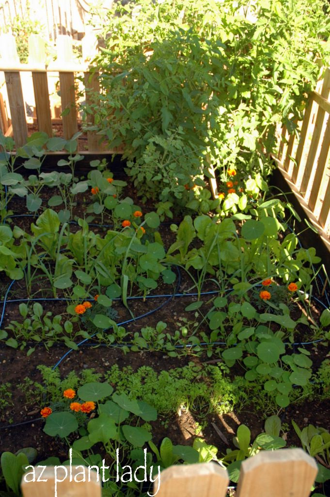 Preparing Your Fall Vegetable Garden Birds And Blooms