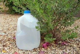 DIY Drip-Water Plants Using Milk Jugs