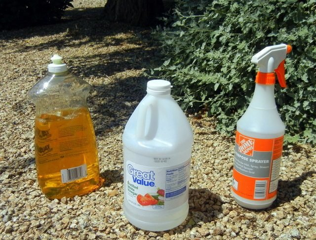 Make Your Own Weed Killer With Vinegar & Soap - Birds and Blooms