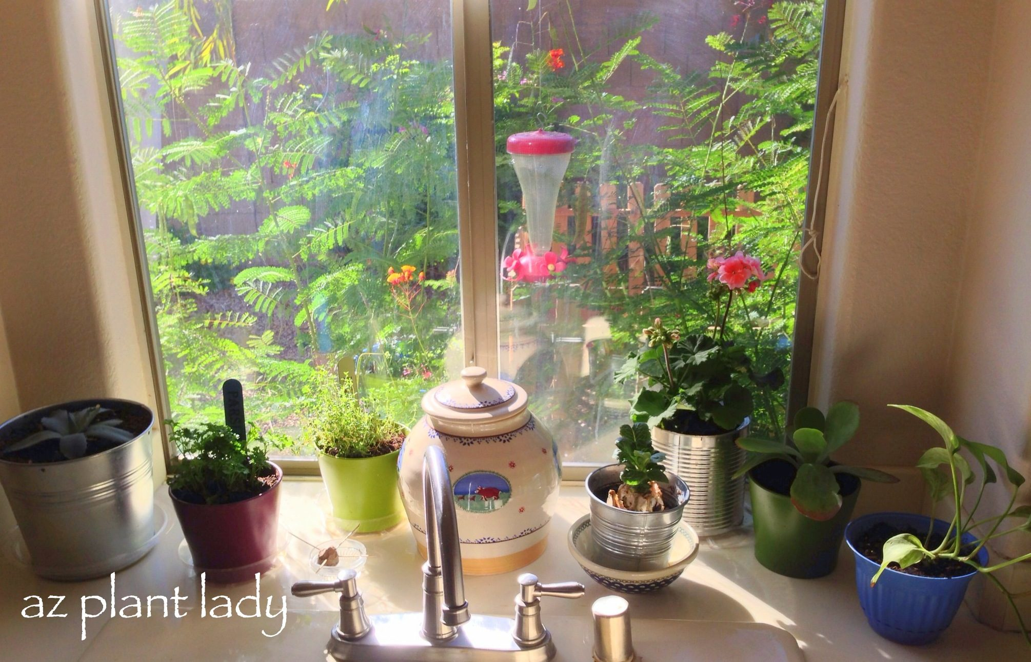 Sneak Peek At Indoor Winter Gardening Projects Birds