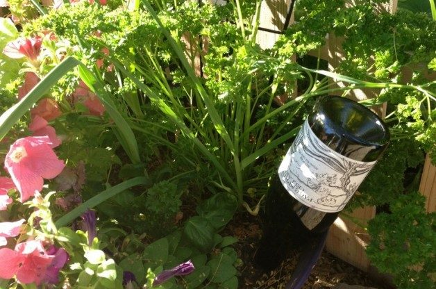 Wine-bottle-self-watering-container-plants