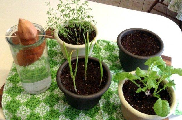 indoor-plants-kitchen-scraps-2-weeks