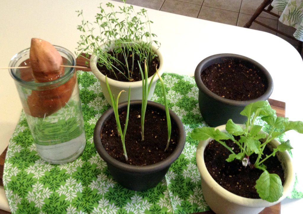 indoor plants from kitchen scraps success birds and blooms