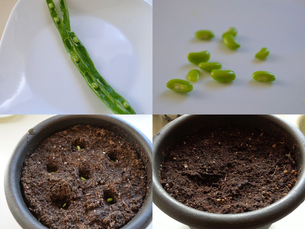 Kitchen Scrap Gardening Indoor Plants From Kitchen Scraps Success Birds And Blooms