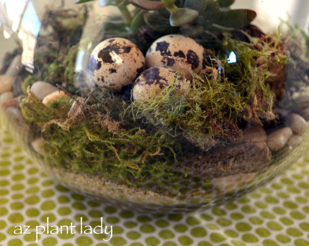 Diy Projects For The Home How To Make A Terrarium