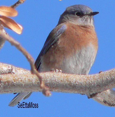 Wild Birds Unlimited | Mealworms ... Para los pájaros | Eugene, OR