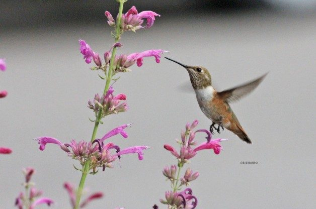 Now Is A Good Time To Do Some Planning To Make Your Yard And Garden More  Attractive To Birds And Butterflies. For Many Of Us Spring Is Still A  Distant Dream ...