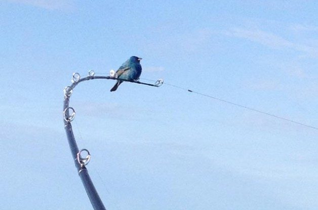 Bluebird Fishing