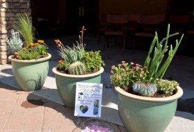 DIY Container Gardening Virtual Demonstration