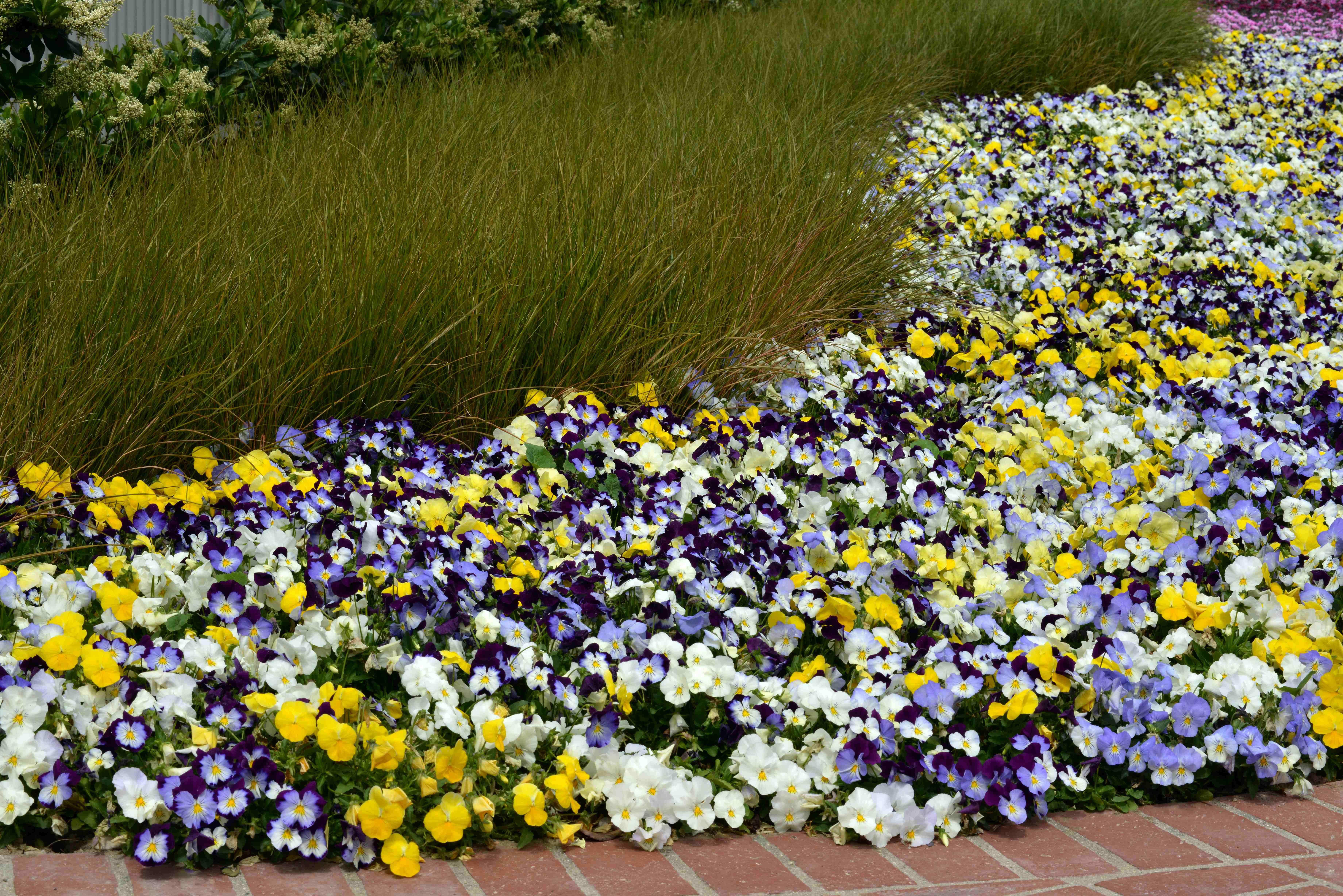 Pansies Landscape Design