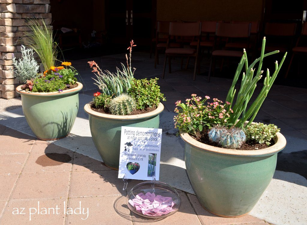 Container Garden Ideas: Container Gardening Ideas And Virtual Demonstration