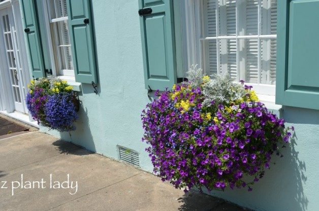 window_box_Charleston